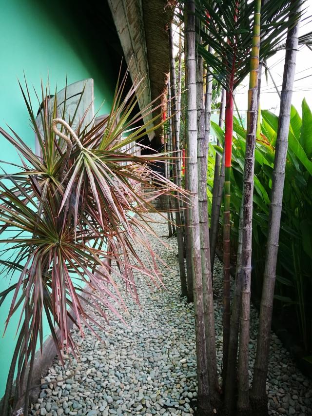 side garden at bodywork.jpg